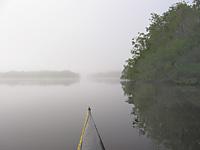 Aligator Bay