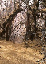 a tunnel through bushes