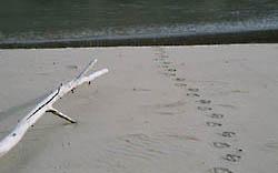 goose sandbar