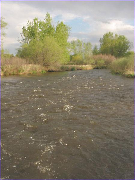 Poudre River - downstream of railroad bridge
