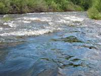 Poudre River - rapid