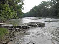 Nursery rapids
