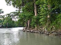 Texas Water Safari - Guadelupe River